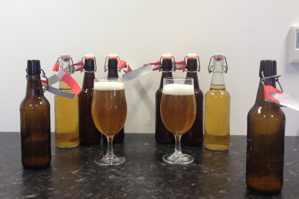 Homebrew lager yeast